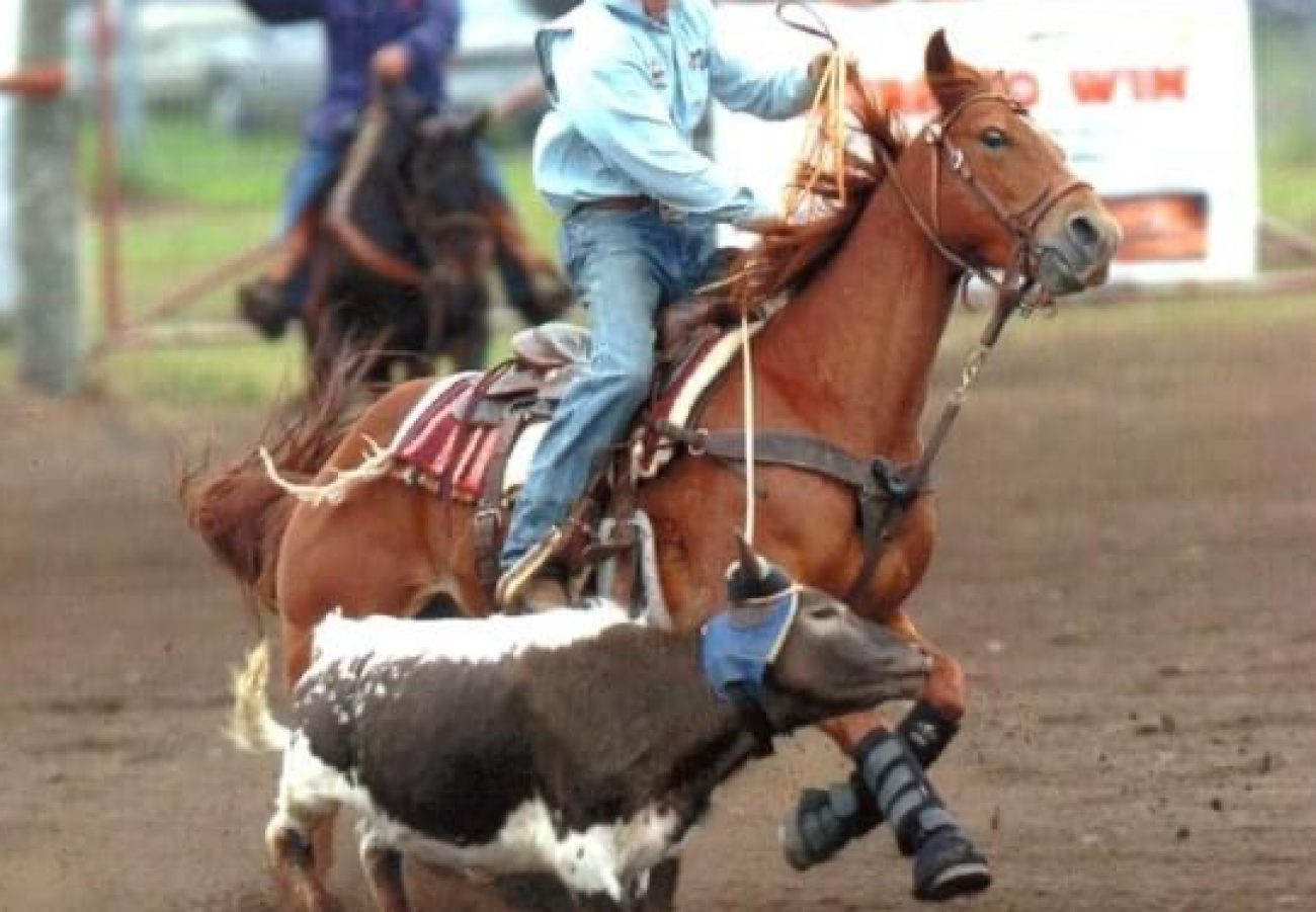 DCF PERFORMANCE HORSES